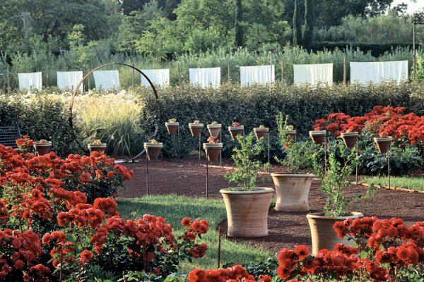 L'œuvre au rouge Rosa 'Prestige de Bellegarde'Paysagistes: Ossart-MaurièresJardin de l'alchimiste 13 France