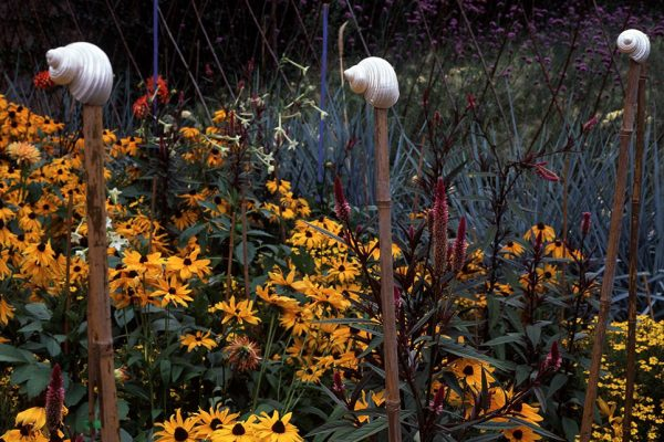 Été Rudbeckia 'Marmelade' Celosia spicata pourpre Dahlia Tagetes pumillaPaysagistes: Ossart-MaurièresJardin des Paradis 81 France