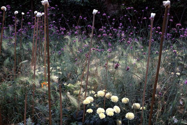 Été Hordeum jubatum Rose d'Inde 'Vanilla' Verbena bonariensis Artemisia abrotanum Paysagistes: Ossart-MaurièresJardin des Paradis 81 France