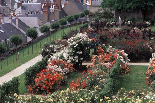 Rosier Roseraie de Blois Paysagistes: : Ossart-Maurières Blois France