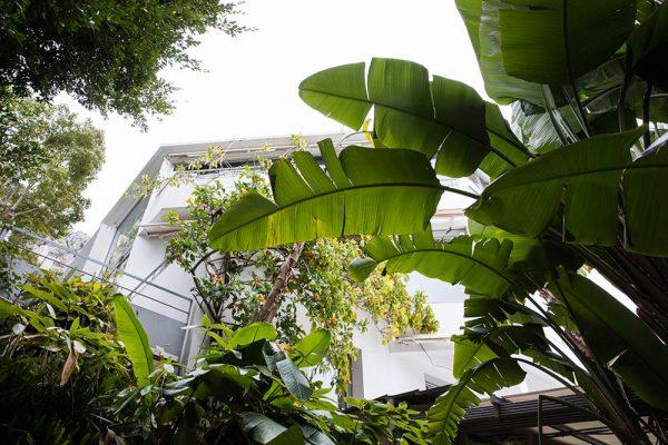 Jardin du restaurant MirazurPaysagistes Ossart-MaurièresMenton France