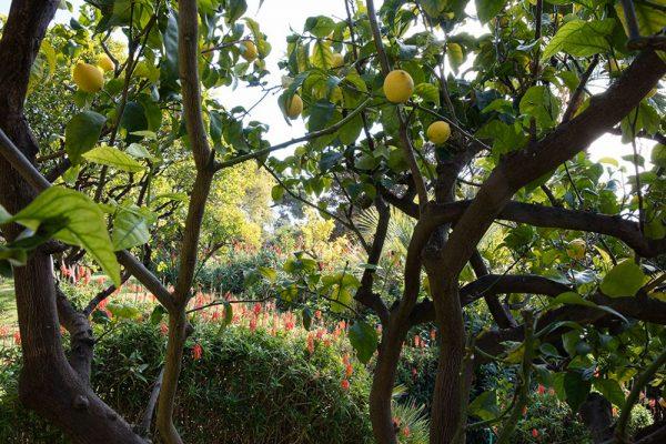 Jardin du restaurant Mirazur Paysagistes Ossart-Maurières Menton France