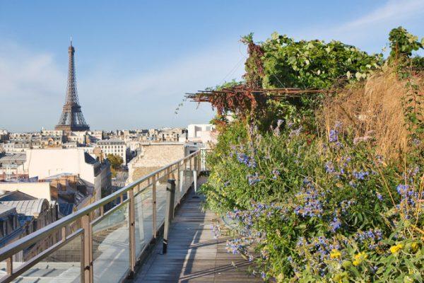 ROOF GARDEN, SAINT DOMINIQUE, PARIS: DESIGNERS ERIC OSSART AND ARNAUD MAURIERES: