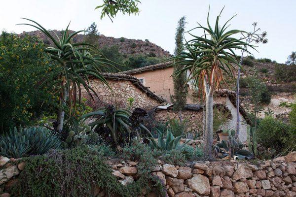 Agave macroacantha Aloe bainesii Aloe traskiiArchitectes paysagistes Ossart & MaurièresAfra Maroc
