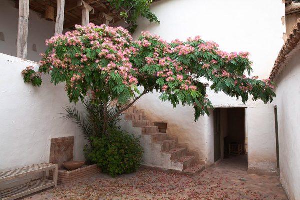 Albizia julibrissinArchitectes paysagistes Ossart & MaurièresAfra Maroc